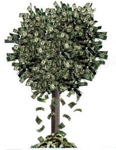 Money Tree Blog image